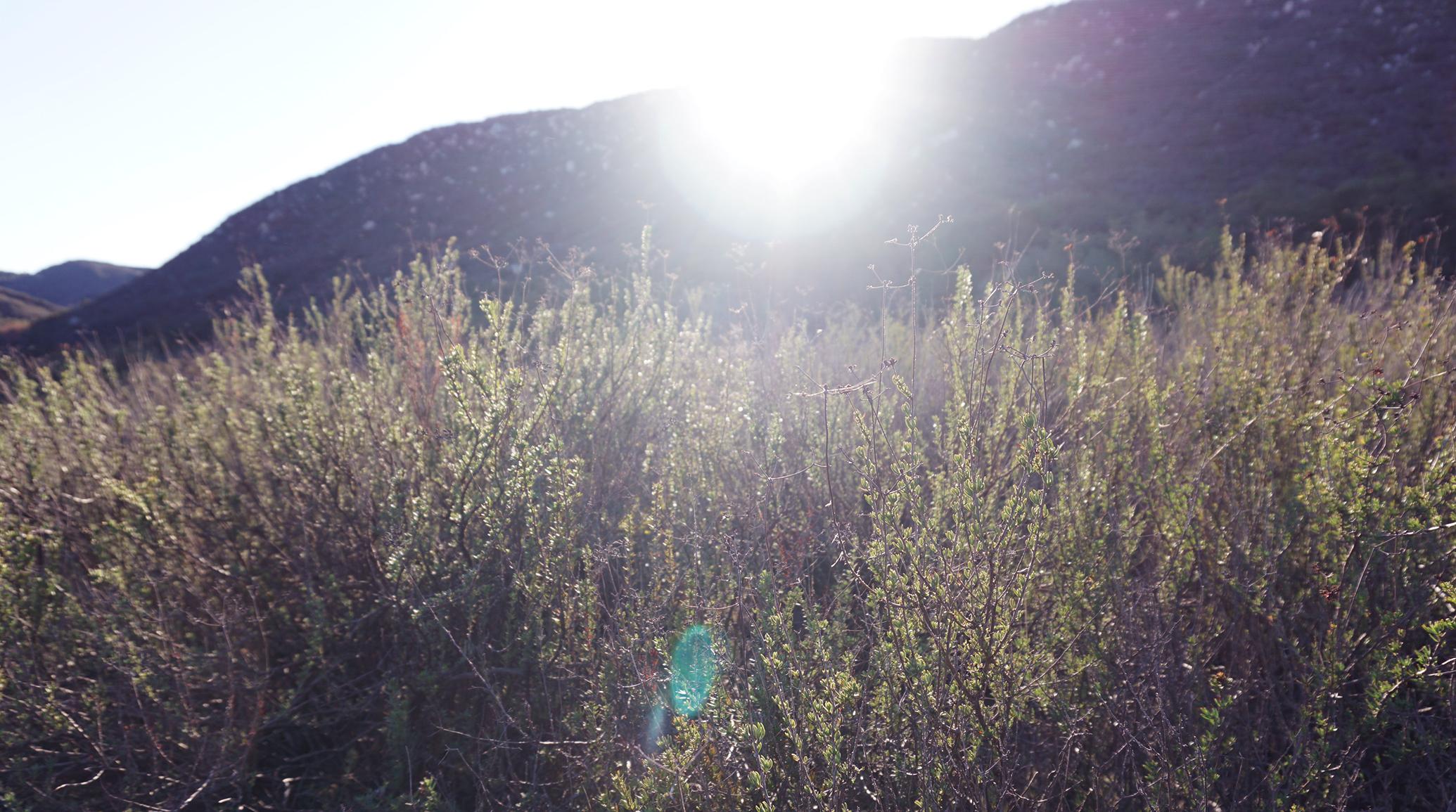 jaziimun mixtape: California Roadtrip